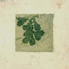specimens: seed and bud