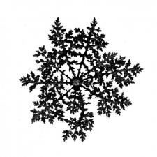 circle plant