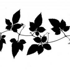 keepsake: vine