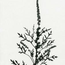 keepsake: seedpods