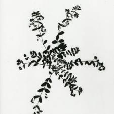 keepsake: weed