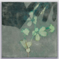 Specimen, 8 x 8 inches, archival pigment print and encaustic on panel