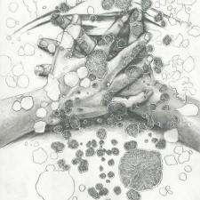 lichen group, detail